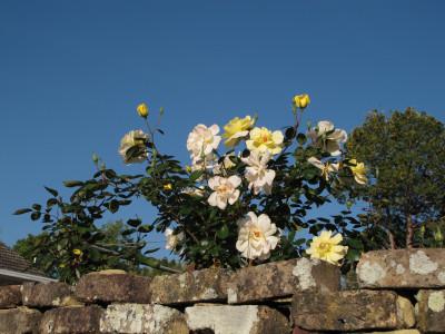 flowers01